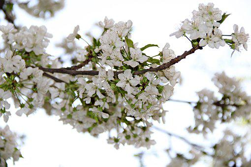 Flower, Chichewa With Age, Garden, Nature, Plant