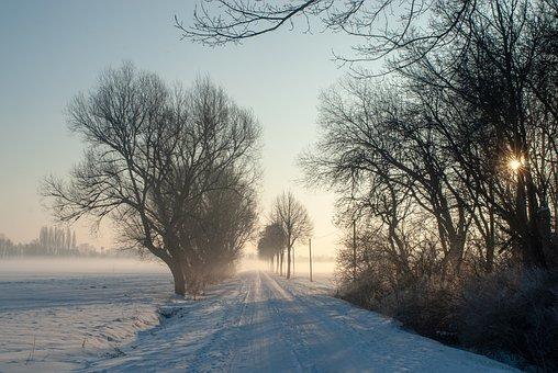 Winter, Morning, Fog, Lane, Snow, Nature, Tree, Cold