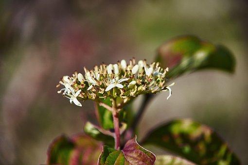 Flower, Autumn, Plant, Colorful, Flowers, Flowering