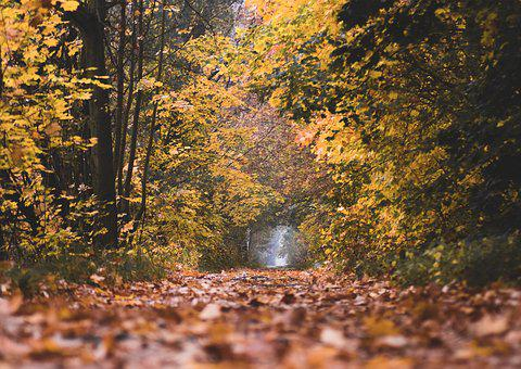 Autumn, Colors, Trees, Foliage, Forest, Clear, Mood