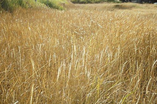 Emotion, Cotton Grass, Tree, Bush, Background, Holiday