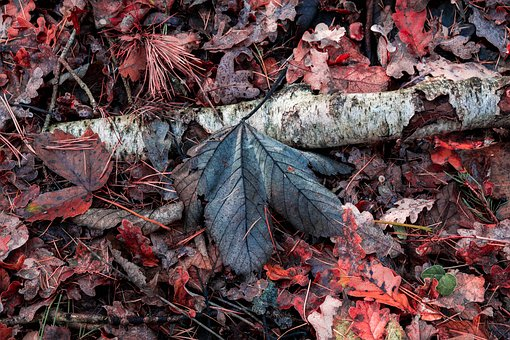Autumn, Leaves, Forest, Nature, Fall Foliage