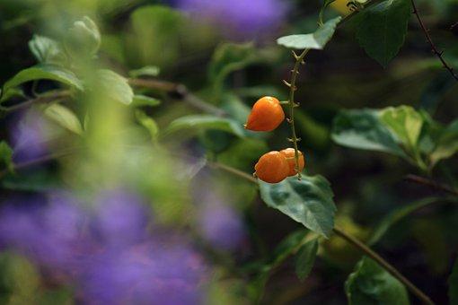 Violet, Orange, Green, Flowers, Colorful, Rainbow