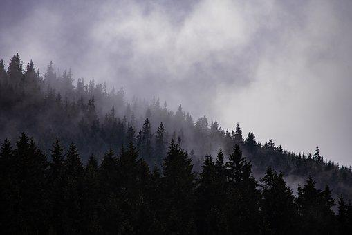 Cloudy, Forest, Fog, Dark, Dramatic, Depressive, Autumn