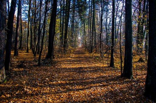 Forest, Autumn, Tree, Foliage, Landscape, Nature