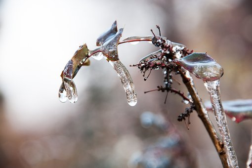 Plant, Ice, Freezing Rain, Nature, Winter, Frost, Cold