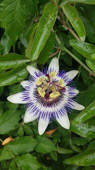 Flower, Passion, Landscape, Floral