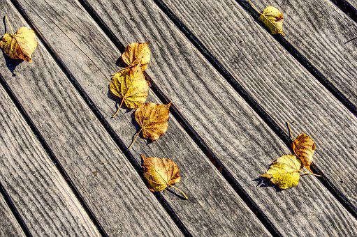 Leaves, Leaf, Autumn, Wood, Bar, Ground, Topping, Away