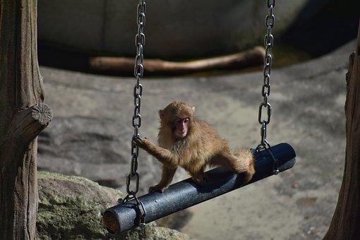 Animal, Zoo, Monkey