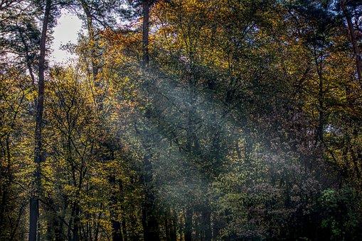 Light, Bill, Ray, Sun, Seem, Forest, Mood, Autumn