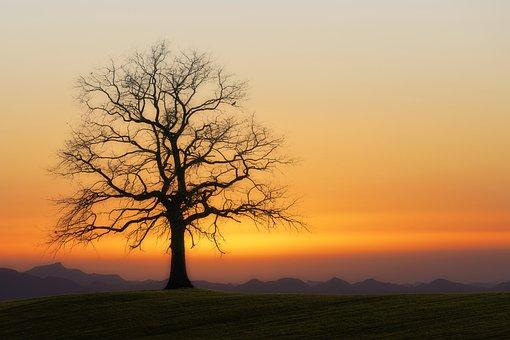 Tree, Kahl, Sunset, Twilight, Nature, Atmosphere, Mood