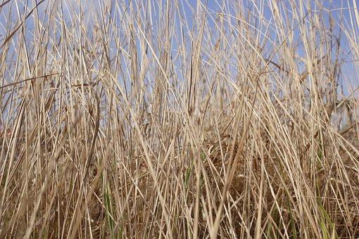 Bush, Neck, Jimson Weed, Dry, Background, Tree