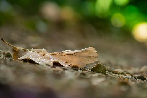 Autumn, Leaves, Run, Orange, Ground, Forest, November
