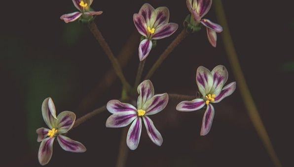 Flowers, Nature, Purple, Plant, Garden, Flora, Petals