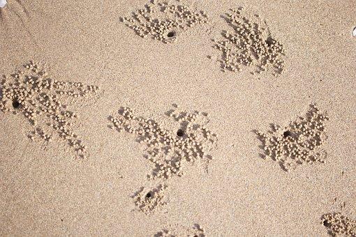 Sand, Shore, The Beach, Sunset