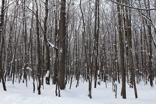 Trees, Winter, Snow, Nature, Cold, Landscape, Forests
