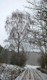 Winter, Way, Forest, Snow, Landscape, Nature, Tree