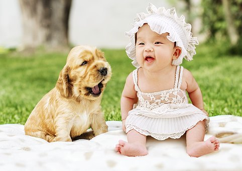 Baby, Dog, Animal, Cute, Pet, Puppies, Puppy, Sweet