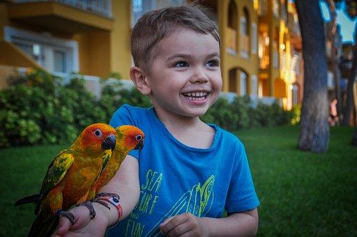 Boy, Parrots, Birds, Child, Tender, Zoo, Eyes, Wings