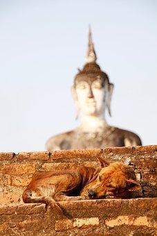 Dog, Buddha, Gold, Meditation, Buddhism, Asia