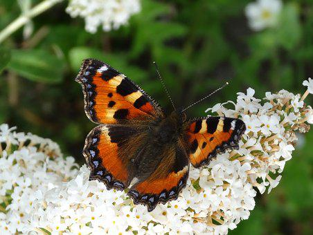 Nature, Butterfly, Insect, Colorful, Garden, Wing