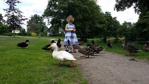 Child, Ducks, Feeding Ducks, Water, Ducky, Walk, Pond