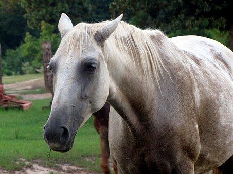 Horse, Animal, Stallion, Mammal, Wild, Equestrian