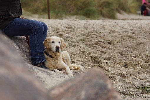 Dog, Beach, Most Beach, Dog On Beach, Golden Retriever