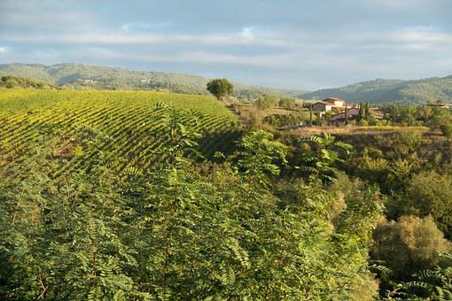Winegrowing, Vineyard, Vine, Slope, Hill, Nature