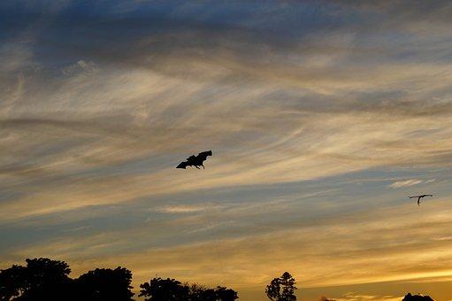 Bat, Flight, Fly, Air, Clouds, Walk, Sunset, Holiday