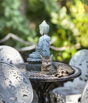 Buddha, Meditation, Statue, Religion, Spiritual