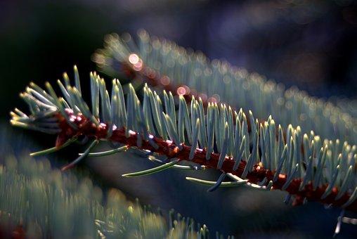 Spruce, Needles, Branch, Sprig, Needle, Coniferous