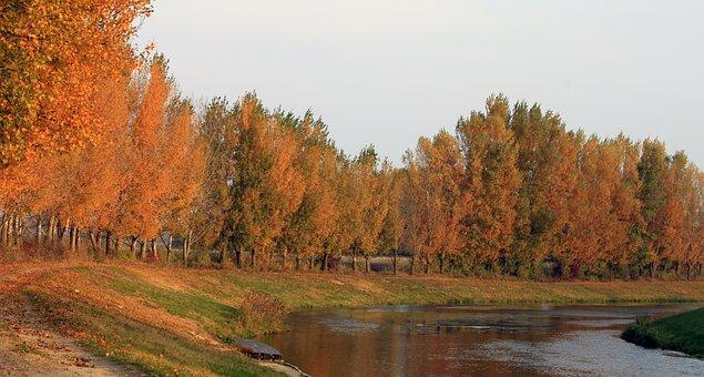 Jesen, Danube, Cilistov, River Side, Orange Leaves