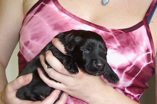 Puppy, Black, Dear, Sweet, Dog, Pet, Black Dog, Young