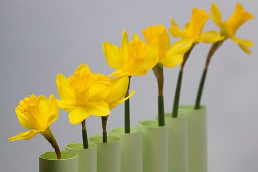 Daffodil, Spring, Easter, Series, Ranking, Blossom