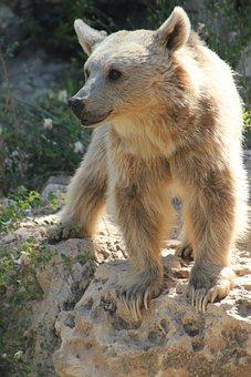 Bear, Animal, White, Zoo, White Bear, Stone, Green