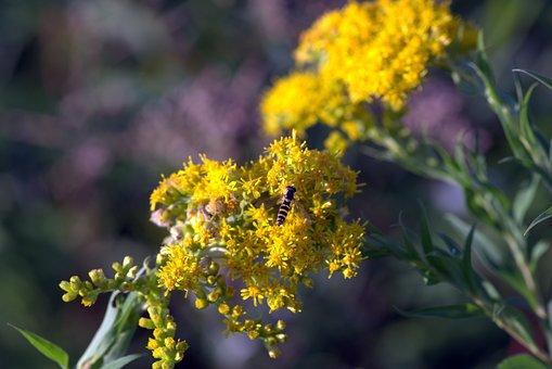 Yellow Flowers, Mucha, Strips, Yellow And Black, Herb