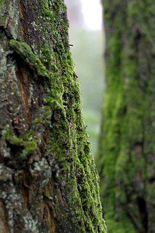 Moss, Lichens, Tree, Old, Green, The Bark