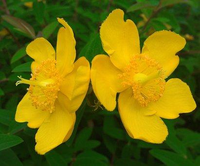 Was, Hypercom, Twin, Flowers, Petal, Yellow, 2, Leaf