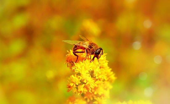 Apostate Resistant, Muchówki, Insect, Bokeh, Animals
