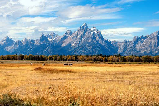 Grand Tetons In The Fall, Autumn, Fall, Grand, Teton