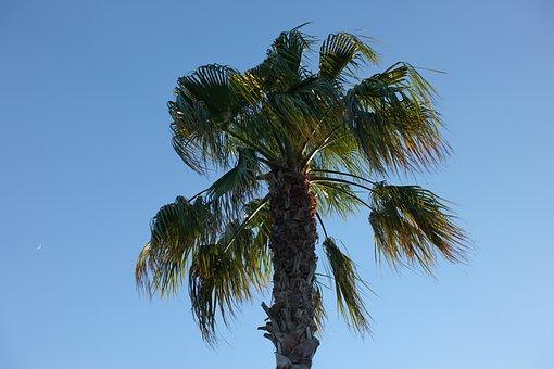 Palm, Palm Tree, Beach, Island, Tropical, Sea