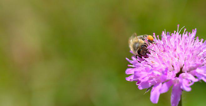 Bee, Animal, Insect, Pink, Green, Beekeeping, Summer
