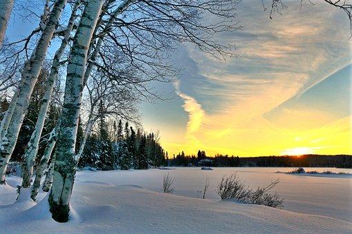 Landscape, Winter, Nature, Cold, Trees, Birch, Sunset
