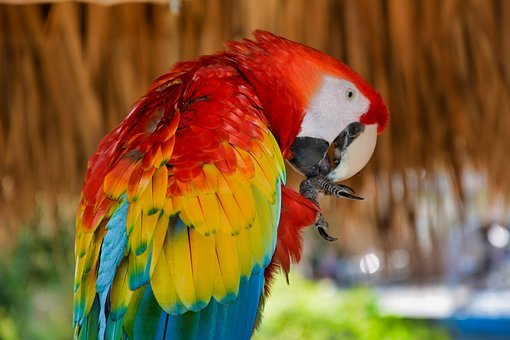 Parrot, Bird, Colorful, Exotic, Fauna, Tropical, Animal