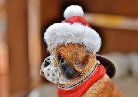 Christmas, Christmas Decoration, Christmas Time