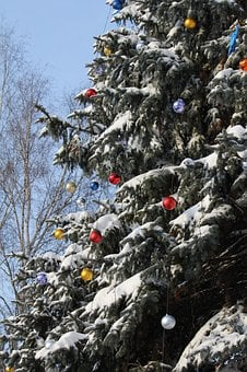 Fir, Christmas, Tree, Snow, New, Year, Background