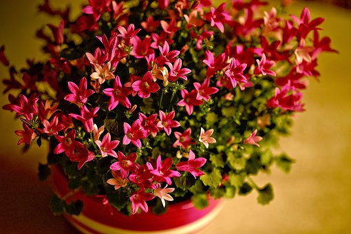 Flowers, Flowering, Small Flowers, Red Flowers, Plant