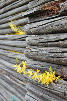 Leap, Flowers, Fence, Nordic, Wood, Garden, Spring