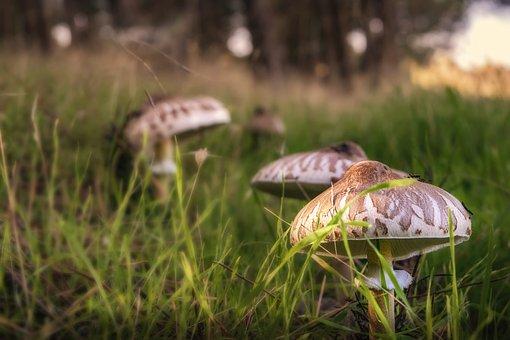Mushrooms, Forest, Autumn, Fungi
